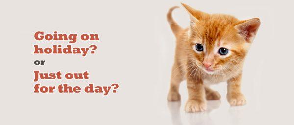 Cat, Sitting, Pet, Sitting, Holidays