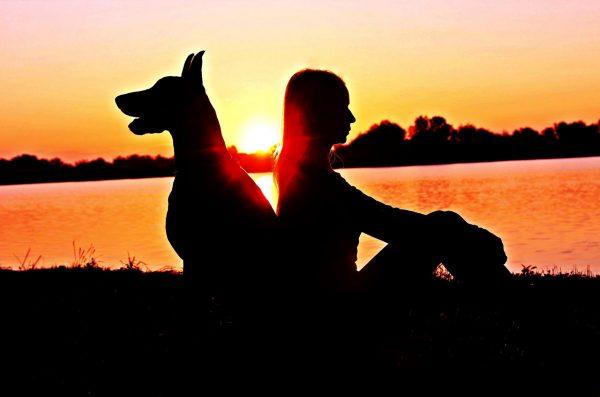 Dog, Walking, Summer