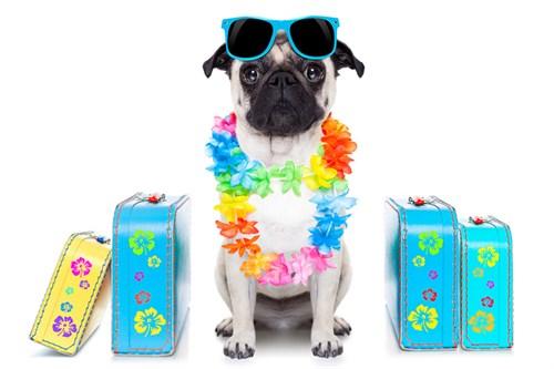 dog home boarding, pet sitting, dog walking,