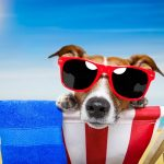 summer tips, dog safety tips, dog walking