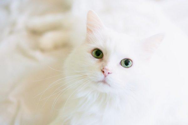 Overnight Cat Sitting, Cat Sitting, Pet Care Services