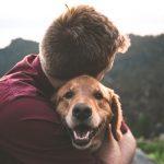 Dog Walker, Dog Walking, Pet Sitting, Dog Home Boarding, Dog Sitting,
