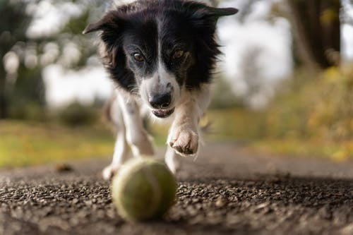 dog toys in stockport, dog walking in stockport,