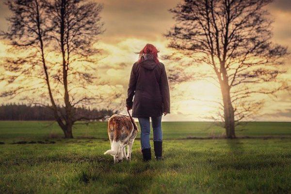 dog walking in bristol