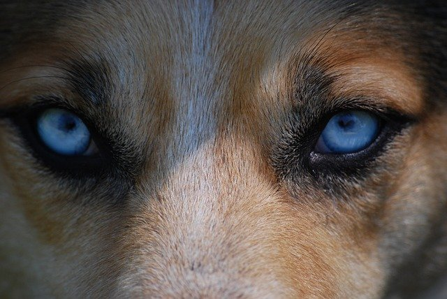 Should you look into your dogs eyes?