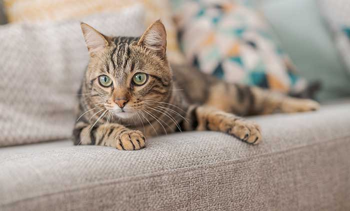 Cat Sitting Services - Scamps & Champs