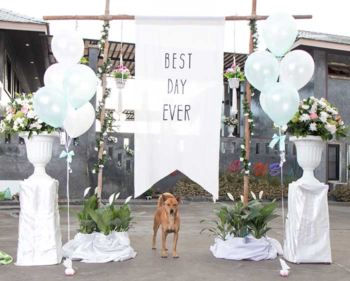 Wedding Pet Chaperone Service - Scamps & Champs