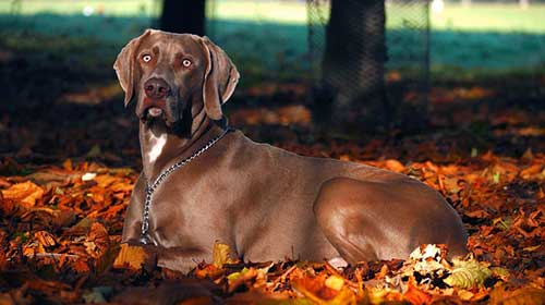 Autumn Hazards For Dogs - Scamps & Champs