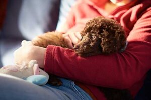 Benefits of Overnight Pet Sitting