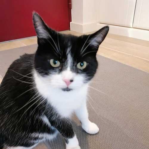 Cat Sitting - Cardiff