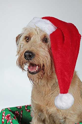 Christmas Pet Recipes & Treats - Scamps & Champs