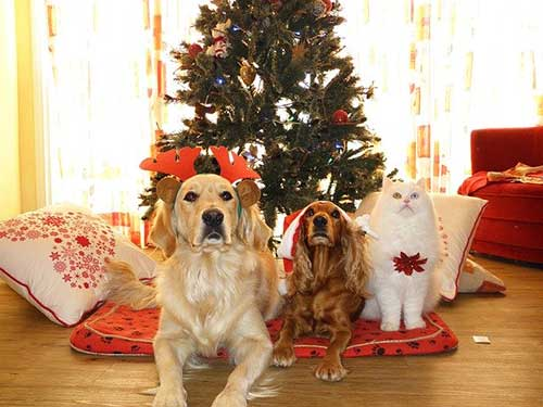 Christmas For Pets - Scamps & Champs