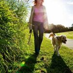 Dog Walking Rates - Scamps & Champs