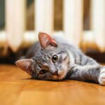 Hiring A Cat Sitter - Scamps & Champs