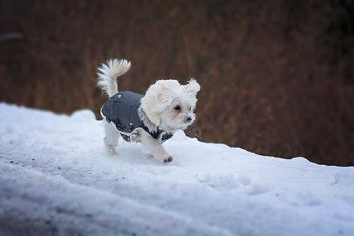 How To Keep Your Dog Safe In Winter