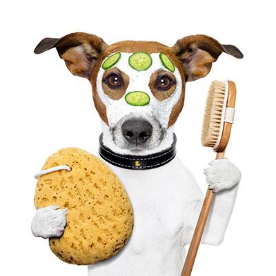 Pet Care - Scamps & Champs