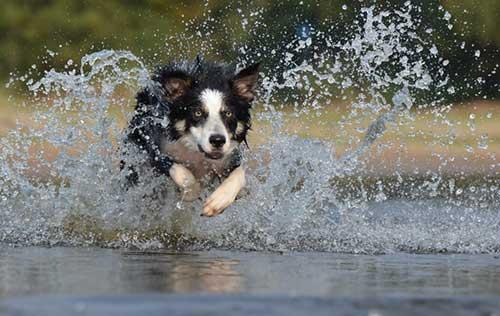 Best Dog Walks In Derby