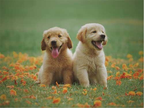 Puppy Socialisation Bristol